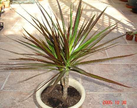 Plantes d 39 int rieur for Plantes tropicales d interieur